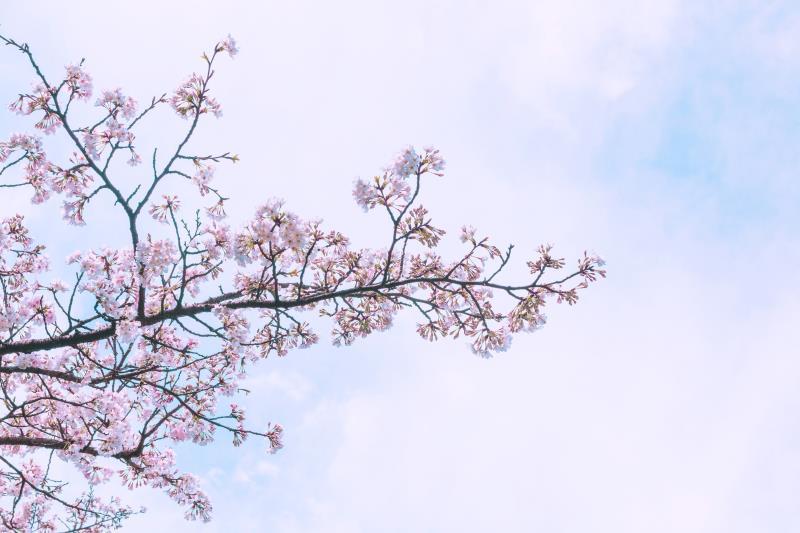"""最美樱花季,用""""樱花系""""潮搭把春日浪漫穿上身!"""